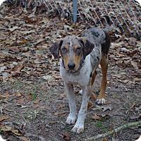 Adopt A Pet :: Dickie - Vidor, TX