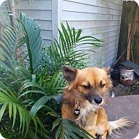 Adopt A Pet :: Rodeo - conroe, TX