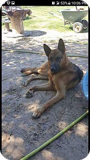 German Shepherd Dog Mix Dog for adoption in Grand Rapids, Michigan - JJ