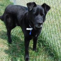 Adopt A Pet :: Kelso - Louisville, OH