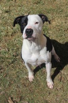 Retriever (Unknown Type) Mix Dog for adoption in Anderson, South Carolina - Kari