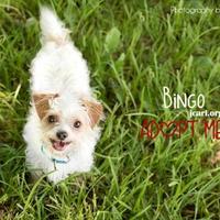 Adopt A Pet :: Bingo - Newton, IA