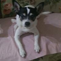 Adopt A Pet :: Lily - Palm Bay, FL