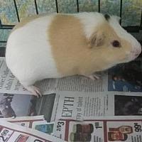 Adopt A Pet :: Munroe - Fall River, MA