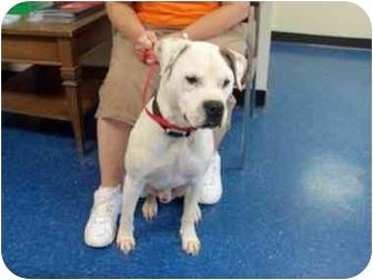 "Terrier (Unknown Type, Medium) Mix Dog for adoption in MARION, Virginia - ""Tex"""