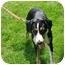 Photo 2 - Collie/Hound (Unknown Type) Mix Dog for adoption in Northville, Michigan - Teddy