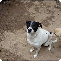 Adopt A Pet :: URGENT! Mia needs you! - Leesport, PA