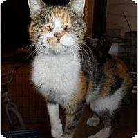 Adopt A Pet :: LITTLE MISS PEACH - Phoenix, AZ