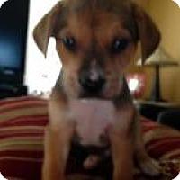 Adopt A Pet :: Baby Leo - Marlton, NJ
