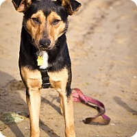 Adopt A Pet :: Amani - Orange, CA