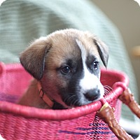 Adopt A Pet :: Esotery - Evergreen, CO
