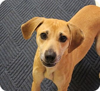 Coonhound (Unknown Type) Mix Dog for adoption in Claremore, Oklahoma - Gracie