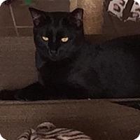 Adopt A Pet :: George - Loxahatchee, FL
