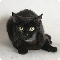 Adopt A Pet :: Betty Boop - Redding, CA