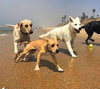Fox Terrier (Smooth)/Terrier (Unknown Type, Medium) Mix Dog for adoption in Murrieta, California - Jasper