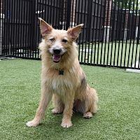 Adopt A Pet :: Tori - Aurora, IL
