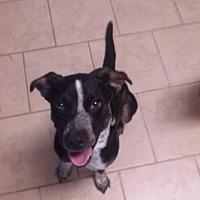 Adopt A Pet :: Amos - Wilmington, DE