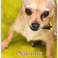 Adopt A Pet :: Sammy - Va Beach, VA