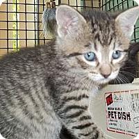 Adopt A Pet :: Riley - Acme, PA