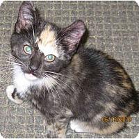 Adopt A Pet :: Karrisa - Catasauqua, PA