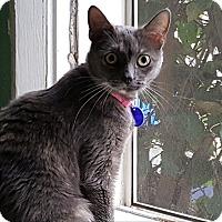 Adopt A Pet :: Beatrice - Pasadena, CA