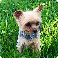 Adopt A Pet :: Oliver - West Palm Beach, FL