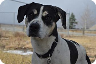 Hound (Unknown Type) Mix Dog for adoption in Buena Vista, Colorado - Snoopy