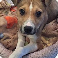 Adopt A Pet :: Alexandra - Arden, NC