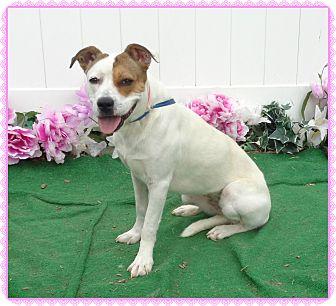 Boxer Mix Dog for adoption in Marietta, Georgia - MIA (R)