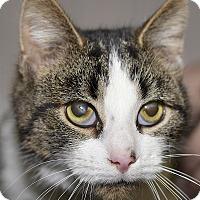 Adopt A Pet :: Chris - Medina, OH