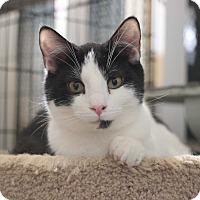 Adopt A Pet :: Finnegan - Carlisle, PA