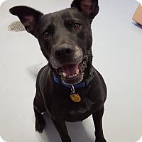 Adopt A Pet :: Reuben - Fort Riley, KS