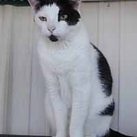 Adopt A Pet :: Chester Dean - New Bern, NC