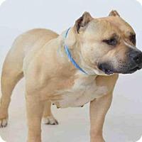 Adopt A Pet :: *PETUNIA - Jackson, CA