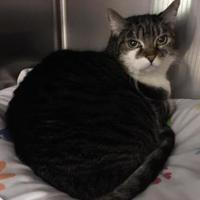 Adopt A Pet :: Skreetch - Blackwood, NJ