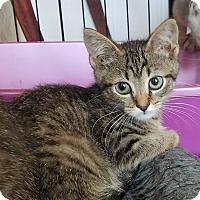 Adopt A Pet :: Caitlyn - Alamo, CA