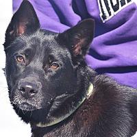 Adopt A Pet :: Fancy - Huntley, IL