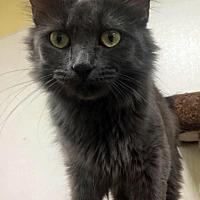 Adopt A Pet :: Princess - Park Falls, WI