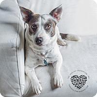 Adopt A Pet :: Porsche - Inglewood, CA