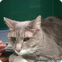 Adopt A Pet :: Amber - Elizabeth, NJ