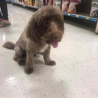 Adopt A Pet :: Chompers - Tucson, AZ