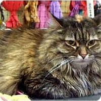 Adopt A Pet :: Dora - Alexandria, VA