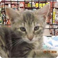 Adopt A Pet :: Diedra - Riverside, RI