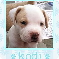 Adopt A Pet :: Kodi - Los Angeles, CA