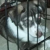 Adopt A Pet :: Dave - Springfield, OH