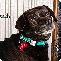 Adopt A Pet :: Gracie - Cincinnati, OH