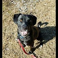 Adopt A Pet :: Finn - Charlotte, NC