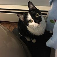 Adopt A Pet :: Stitch (JL) - Little Falls, NJ