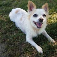 Adopt A Pet :: SuzieQ - Ashtabula, OH