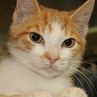 Adopt A Pet :: BULLSEYE - Clayton, NJ